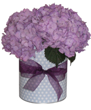Purple Beauty Goodie Tin